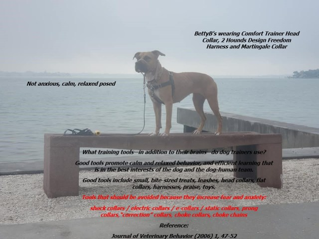 Posed Foggy Comfort Trainer, Freedom Harness, Martingale Collar, Island Top Tags Feb 2020