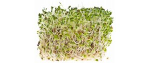 raw-sprouts