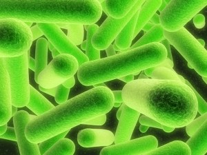 USDA Outlaws More Strains of Dangerous E. Coli