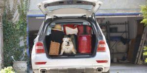 dog cooler trunk gift guide