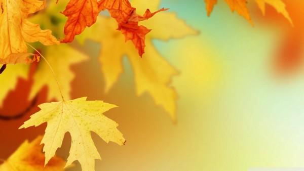 Les Fonds D'écran De L'automne 2015
