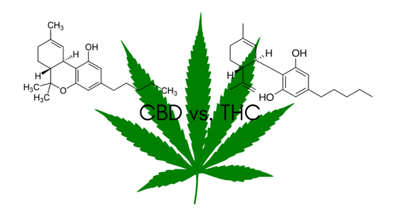 CBD Facts: CBD vs THC - Restart CBD