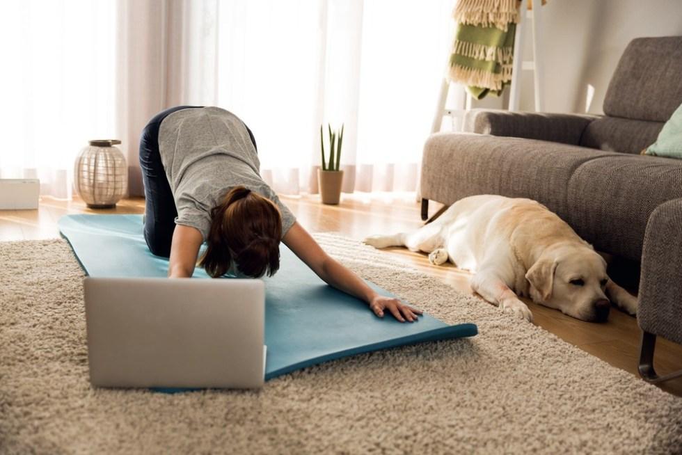 fizioterapie online