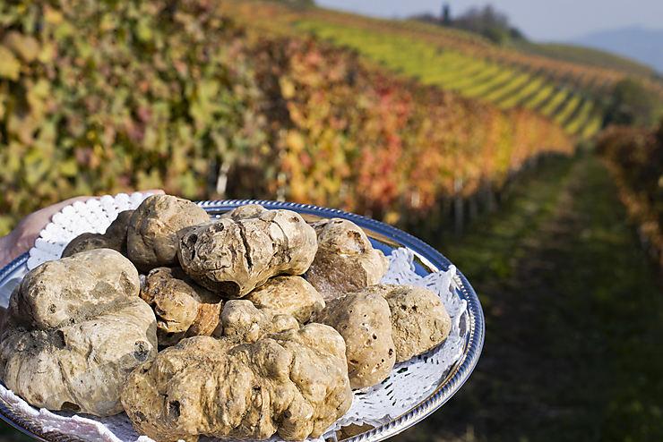La truffe blanche de Villeneuve-sur-Vère