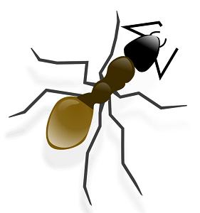 ant-pestcontrol