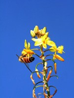 bees-and-wasps-facts-eliminate-bees-5