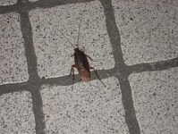 infestation-of-roaches-1