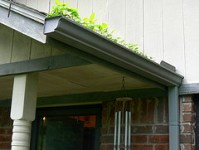 insect-inspection-gutters