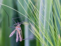mosquito-in-yard