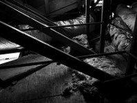 rodent-problems-attic-3