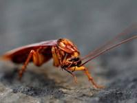 winter-cockroach-infestation