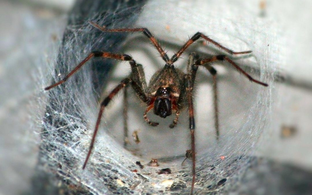 Spiders and Crawling Insects In Winter