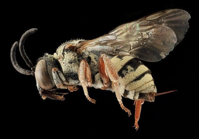 What To Do When: Bees, Wasps or Hornets Are Present