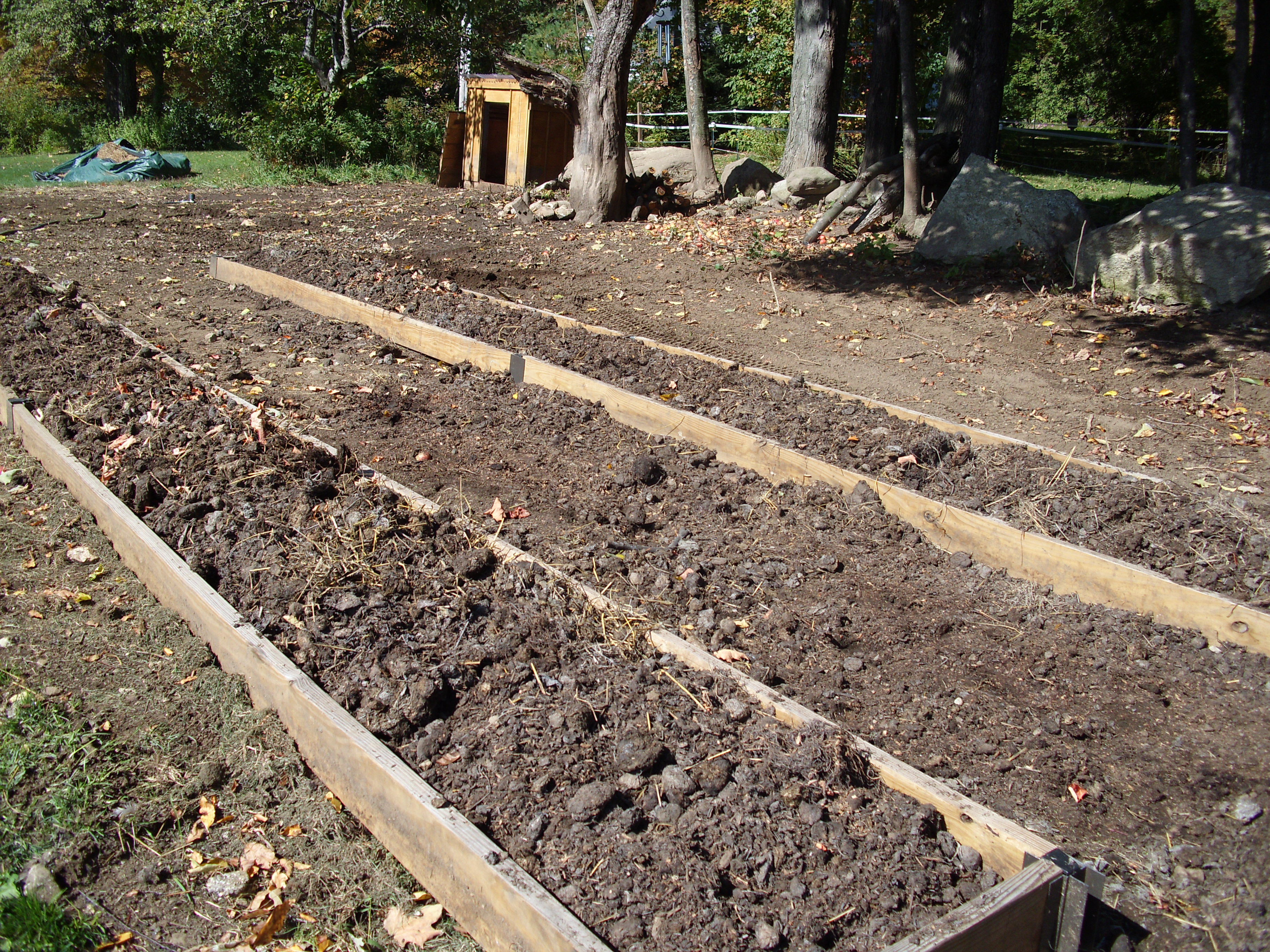 This is the old pig pen, nicely turned over soil.  Seeded and new beds built.  I fill them with nearly finished compost.  I'll let them get soaked this week then cover them with  mulch hay.  Ready for early crops next spring.