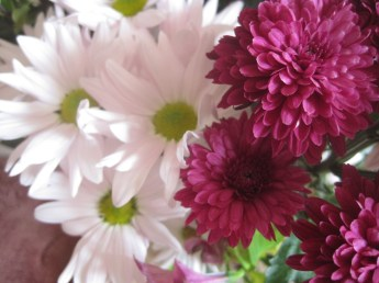Ever lasting chrysanthemums