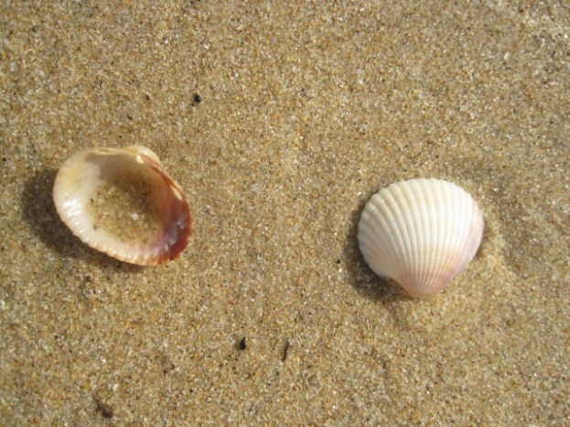 And the shells I found everywhere