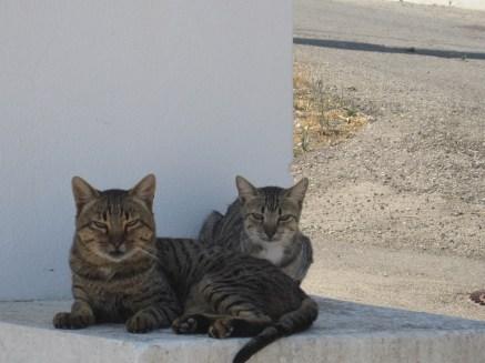 Not the friendliest of cats!