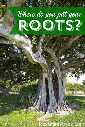 your-roots