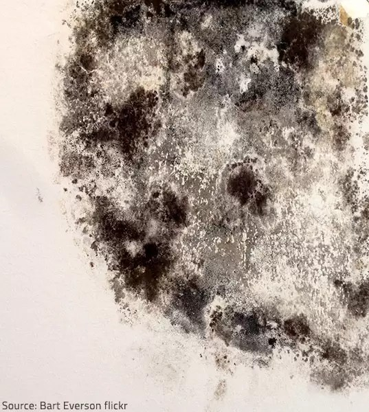 Mold vs Mildew: The Main Differences between Mold and Mildew