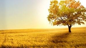treefield
