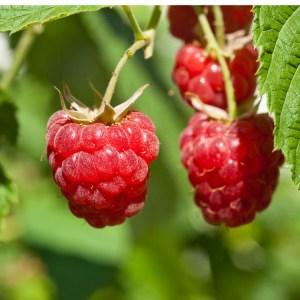 Raspberry-Encore