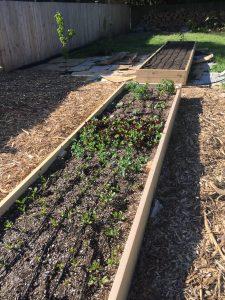 Cedar Raised Garden Beds with Drip Irrigation