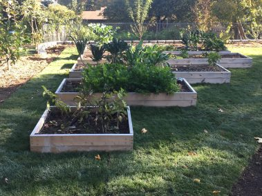 raised garden bed and grass sod