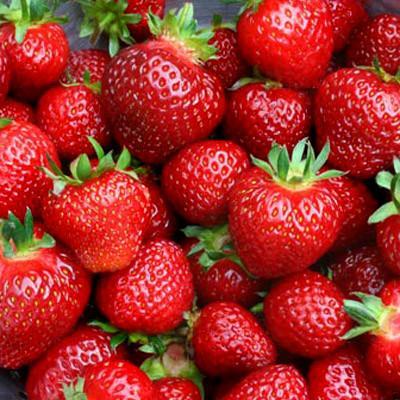 strawberry tristar
