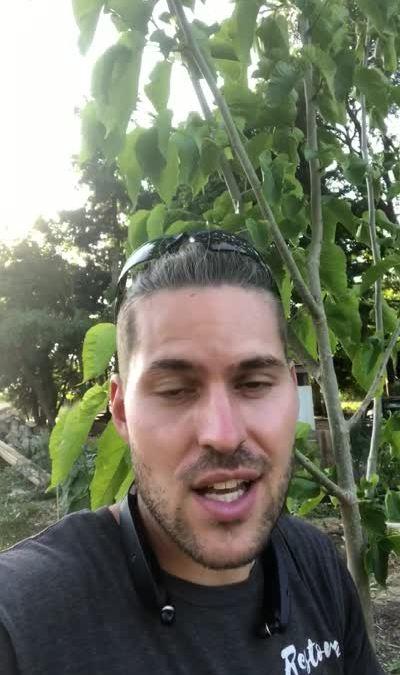 pakistan-mulberry-video-mp4