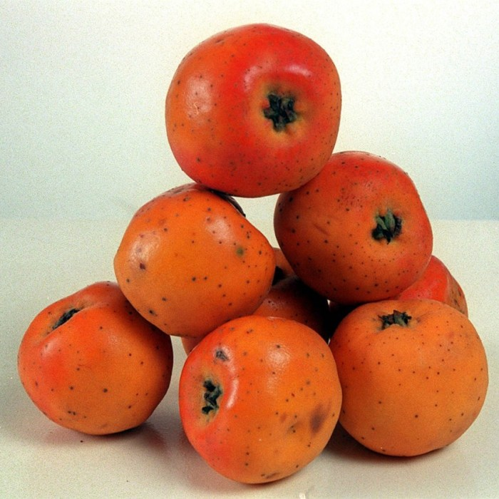 Tejocote red fruit
