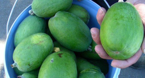 pineapple guava kaiteri
