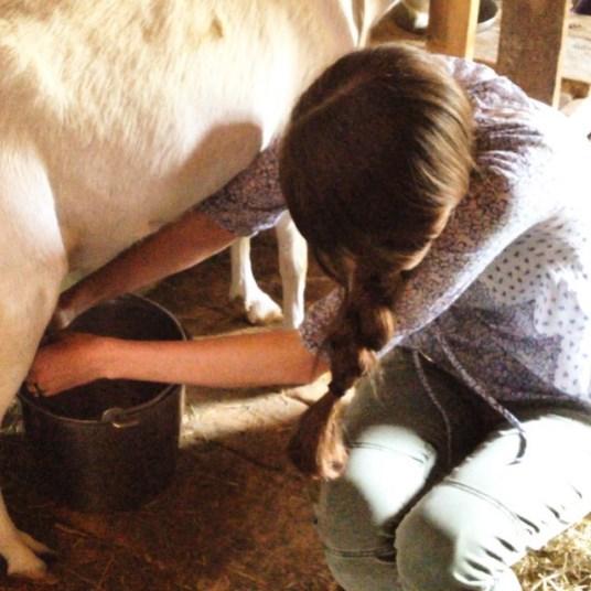 hannah corson goat milking