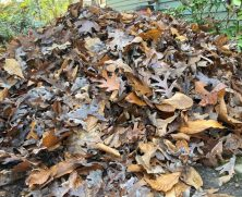 This image has an empty alt attribute; its file name is leaves-in-garden.jpg