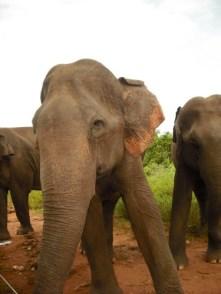 3 elephants3
