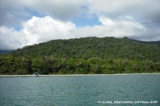 australia queensland daintree rainforest beach
