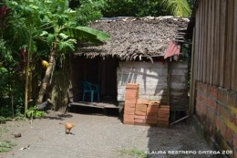 gallina en el patio, Termales