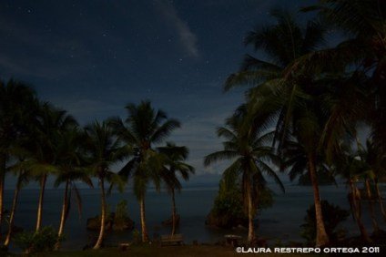 noche estrellada 1