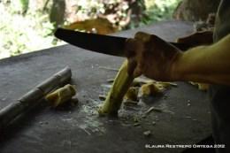 cortando la caña