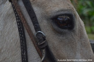 23 - shakira, caballo