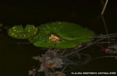 amphibians 24