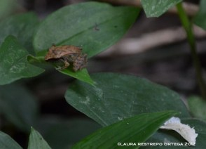 amphibians 9
