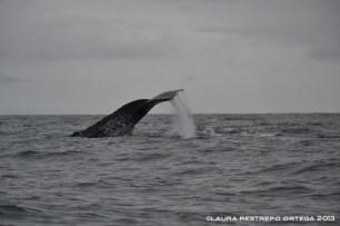 103 -ballenas 5