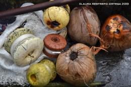 17 -cocos y pesca