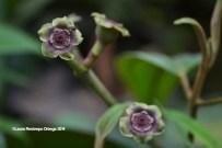 reserva orejiamarillo flores 1