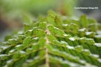 reserva orejiamarillo hojas 1
