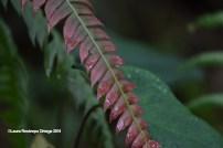 reserva orejiamarillo hojas 2