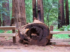 SF Muir Woods 6