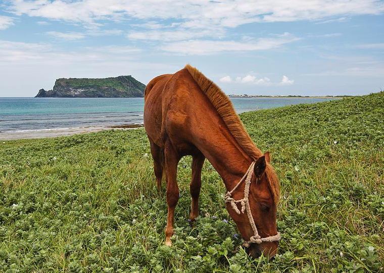 jeju-horse-and-seongsan-ilchulbong-douglas-macdonald