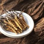 Cordyceps – Crește Imunitatea, încetinește procesul de îmbătrânire, crește speranța totală de viață, Beneficii şi proprietăţi Cordyceps