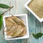 17 Boli care pot fi tratate cu frunza de dafin